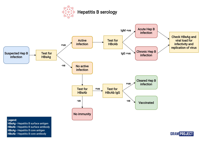 Interpreting hepatitis B serology flowchart